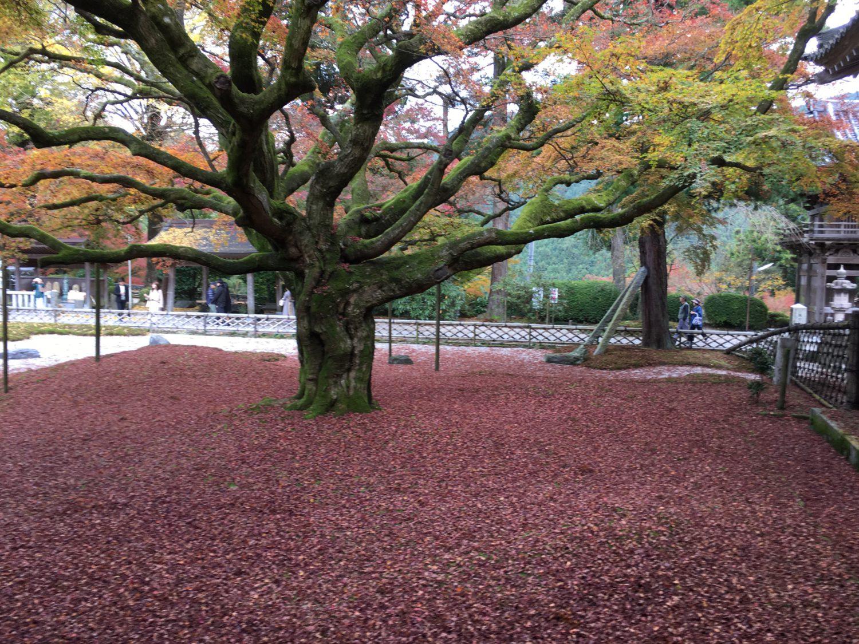 秋深まり・・・もうすぐ師走