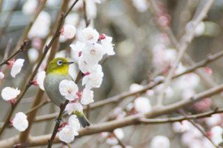 春…いかがお過ごしでしょうか🌸