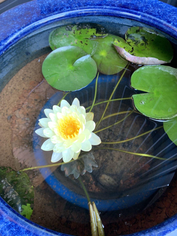 夏の植物✨