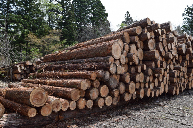杉の無垢材を使う理由
